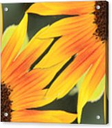 Sunflowers Corners Acrylic Print