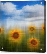 Sunflowers Dreamscape Acrylic Print