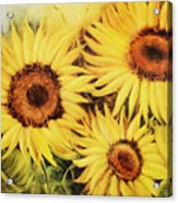 Sunflowers Acrylic Print by Fatima Stamato