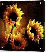 Sunflowers In Shadow Acrylic Print