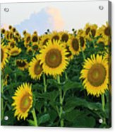 Sunflowers In The Clouds Acrylic Print