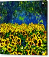 Sunflowers No2 Acrylic Print