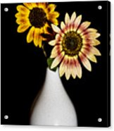 Sunflowers On Black Background And In White Vase Acrylic Print