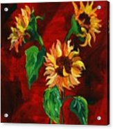 Sunflowers On Rojo Acrylic Print