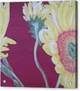 Sunflowers On The Run Acrylic Print
