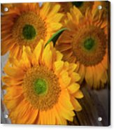 Sunflowers On White Boards Acrylic Print