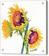 Sunflowers On White Acrylic Print