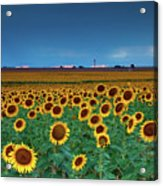 Sunflowers Under A Stormy Sky By Denver Airport Acrylic Print