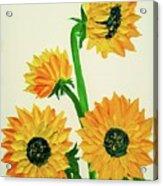 Sunflowers Using Palette Knife Acrylic Print
