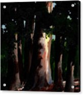 Sunlight And Shadows - Eucalyptus Majesties Acrylic Print