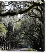 Sunlight And Shadows On Live Oaks Acrylic Print