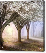 Sunlight In The Meadow Acrylic Print