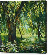 Sunlight Into The Willow Trees Acrylic Print
