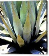 Sunlight On Blue Agave - Digital Art Acrylic Print