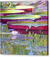 Sunlight On Lily Pads Acrylic Print