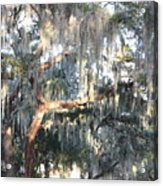 Sunlight On Mossy Tree Acrylic Print