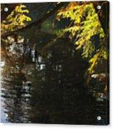 Sunlight Reflections Acrylic Print