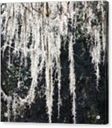 Sunlight Through Spanish Moss Acrylic Print