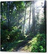 Sunlight Through Trees, Ecola State Acrylic Print