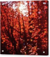 Sunlight Thru Autumn Leaves Abstract Acrylic Print