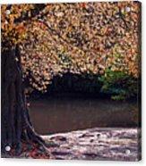 Sunlit Autumn Canopy Acrylic Print