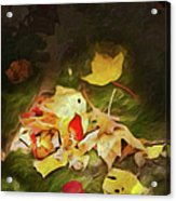 Sunlit Autumn Leaves On Dark Moss Ap Acrylic Print