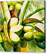 Sunlit Coconuts Acrylic Print