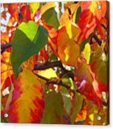 Sunlit Fall Leaves Acrylic Print