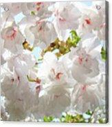 Sunlit Flowers Art Prints White Tree Blossoms Baslee Troutman Acrylic Print