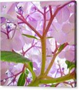 Sunlit Hydrangea Flowers Garden Art Prints Baslee Troutman Acrylic Print
