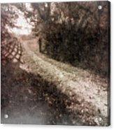 Sunlit Pathway Acrylic Print