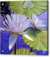 Sunlit Petals Acrylic Print