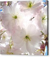 Sunlit Pink Blossoms Art Print Spring Tree Blossom Baslee Acrylic Print