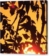 Sunlit Shadows Acrylic Print