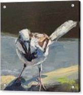 Sunlit Sparrow Acrylic Print