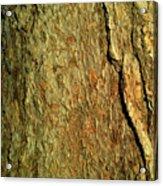 Sunlit Tree Bark Acrylic Print