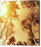 Sunlit Tree Tops Acrylic Print