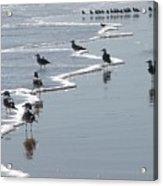 Sunning Gulls Acrylic Print