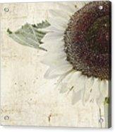 Sunny Albino Sunflower Acrylic Print