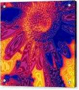 Sunny And Wild Acrylic Print