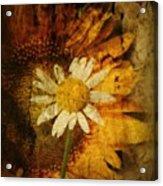 Sunny Antiqued Acrylic Print