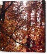 Sunny Autumn Day Poster Acrylic Print
