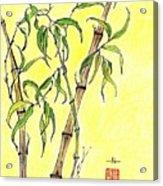 Sunny Bamboo Acrylic Print