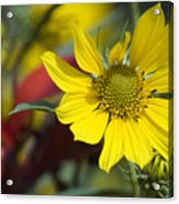 Sunny Blooms Acrylic Print