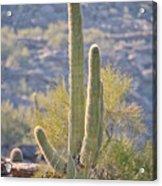 Sunny Cactus Acrylic Print