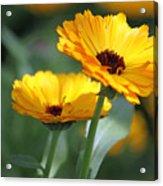 Sunny Day Flowers Acrylic Print