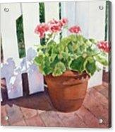 Sunny Day Geraniums Acrylic Print by Bobbi Price