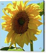 Sunny Day Acrylic Print