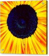 Sunny Flower Acrylic Print