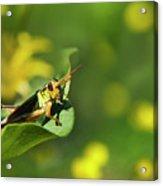 Green Grasshopper Acrylic Print